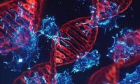 DNA 損傷與修復