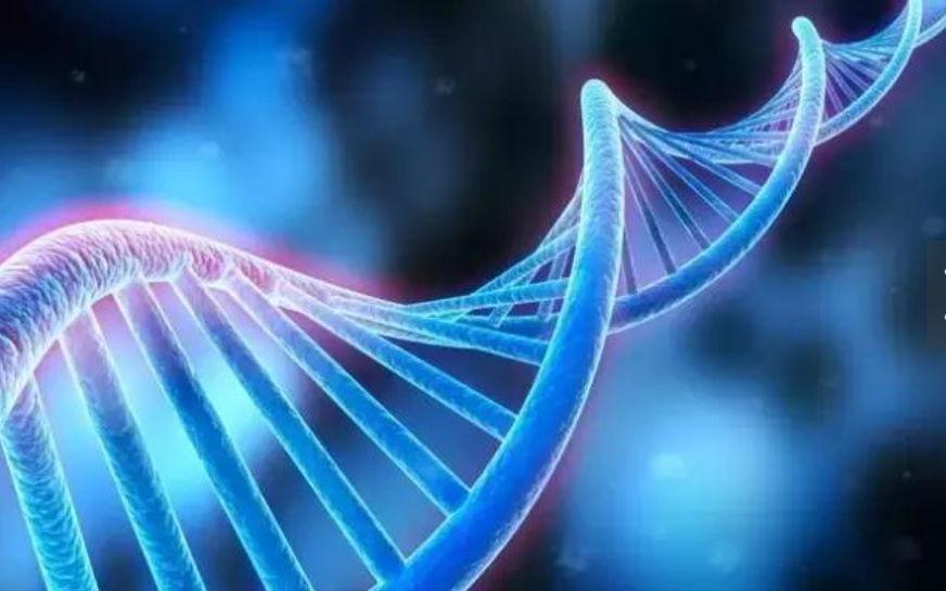DNA 分子